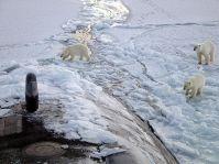 800px-Polar_bears_near_north_pole