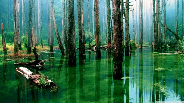 flooded_forest-wallpaper-1600x900